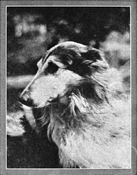 Cover of the book Lad: a dog by Albert Payson Terhune