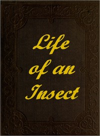 Cover of the book The Life of an Insect by Anonymous