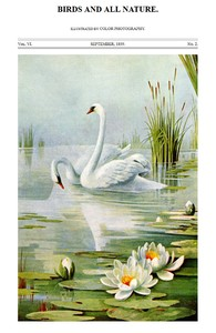 Cover of the book Birds and All Nature, Vol. VI, No. 2, September 1899 by Various