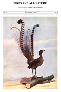 Cover of the book Birds and All Nature, Vol. VI, No. 5, December 1899 by Various