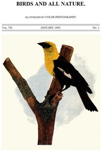 Cover of the book Birds and All Nature Vol VII, No. 1, January 1900 by Various